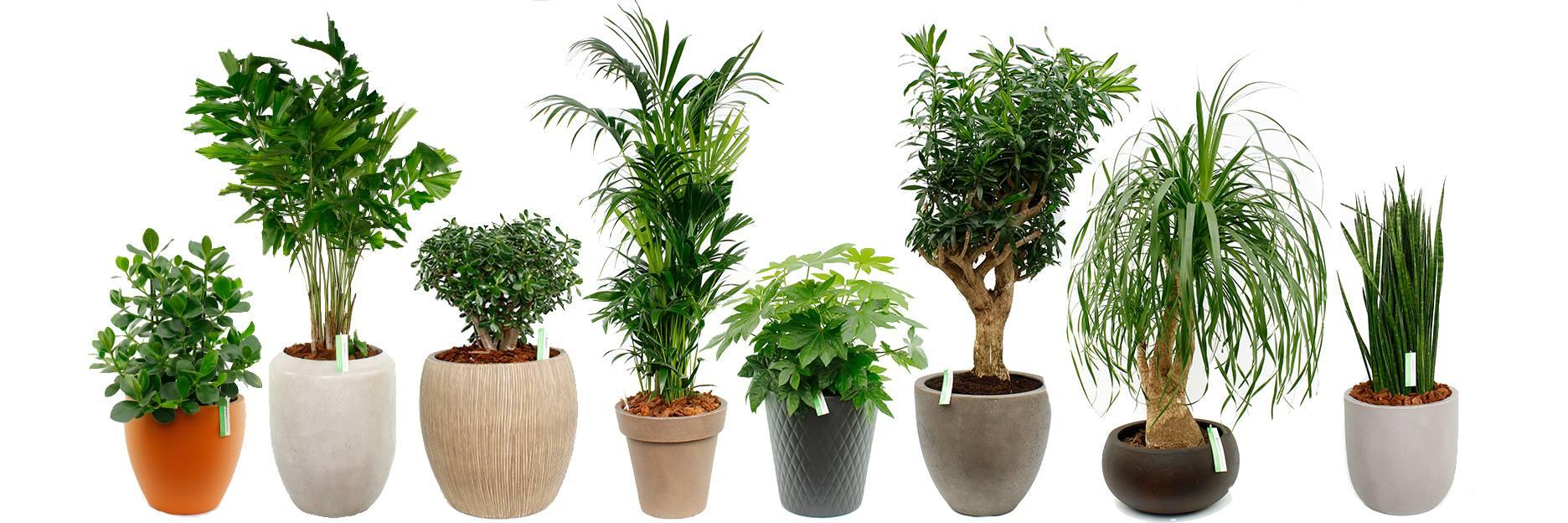 een rij met kamerplanten naast elkaar